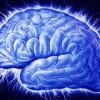 Создана первая точная модель человеческого мозга