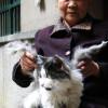 В Китае живет кот, у которого выросли крылья