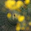 Из паучьей паутины можно шить одежду