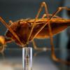 Москве грозит вспышка малярии
