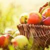 Одно яблоко в день может защитить от инфаркта