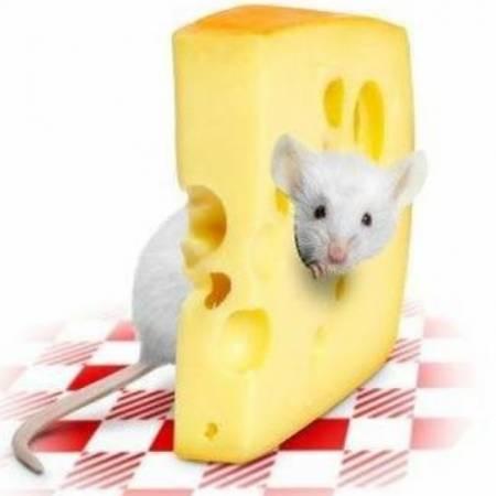 интересные факты про сыр