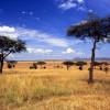 Заповедник Серенгети в Африке