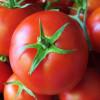 Кожура яблок и томатов является эффективным фильтром для очистки воды