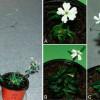 Российские биологи воскресили растение возрастом 30 тысяч лет