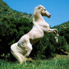 Почему капля никотина убивает лошадь?
